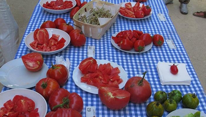 Prova_tomate